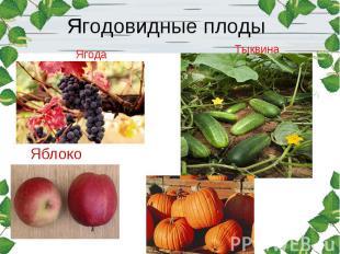 Ягодовидные плоды