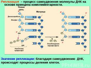 Репликация – процесс самоудвоения молекулы ДНК на основе принципа комплементарно