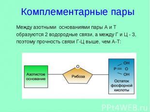 Комплементарные пары Между азотными основаниями пары А и Т образуются 2 водородн