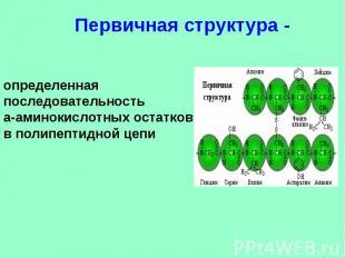 Первичная структура - определенная последовательностьa-аминокислотных остатков в