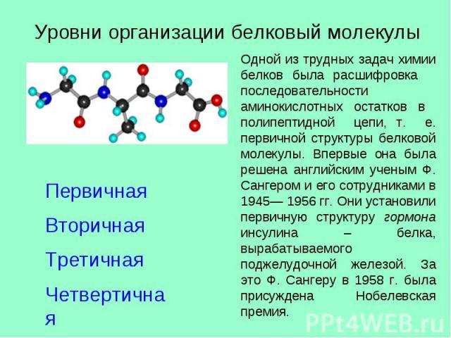 Уровни организации белковый молекулы ПервичнаяВторичная ТретичнаяЧетвертичная Одной из трудных задач химии белков была расшифровка последовательности аминокислотных остатков в полипептидной цепи, т. е. первичной структуры белковой молекулы. Впервые …