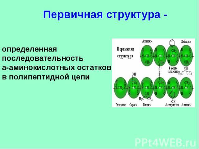 Первичная структура - определенная последовательностьa-аминокислотных остатков в полипептидной цепи