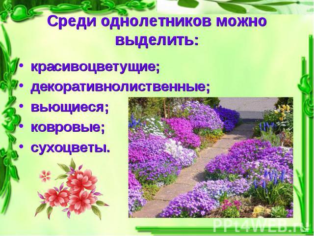 Среди однолетников можно выделить: красивоцветущие;декоративнолиственные;вьющиеся;ковровые;сухоцветы.