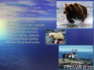 дикие животные, насчитывающие 37 видов: медведи, дикие олени, лоси, волки, горны