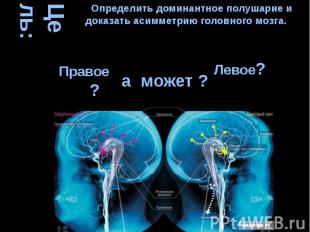 Цель: а может ? Определить доминантное полушарие и доказать асимметрию головного