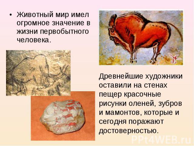 Животный мир имел огромное значение в жизни первобытного человека. Древнейшие художники оставили на стенах пещер красочные рисунки оленей, зубров и мамонтов, которые и сегодня поражают достоверностью.