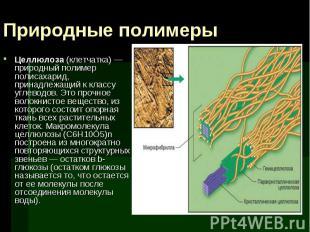Целлюлоза (клетчатка) — природный полимер полисахарид, принадлежащий к классу уг