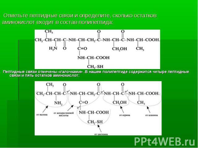 Пептидные связи отмечены «галочками» .В нашем полипептиде содержится четыре пептидные связи и пять остатков аминокислот: Пептидные связи отмечены «галочками» .В нашем полипептиде содержится четыре пептидные связи и пять остатков аминокислот: