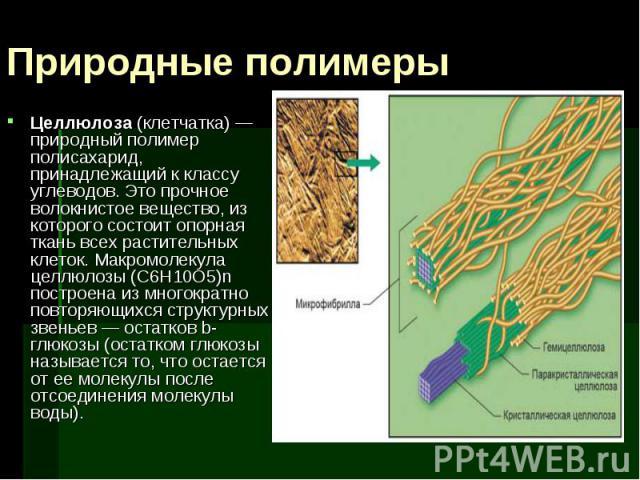 Целлюлоза (клетчатка) — природный полимер полисахарид, принадлежащий к классу углеводов. Это прочное волокнистое вещество, из которого состоит опорная ткань всех растительных клеток. Макромолекула целлюлозы (С6Н10О5)n построена из многократно повтор…