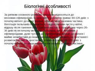 Біологічні особливостіЗа ритмом сезонного розвитку тюльпани відносяться до весня