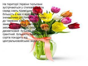 На території України тюльпани зустрічаються у степовій зоні та серед скель Кримс