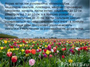 Форма квітки теж різноманітна: келихоподібна, чашовидна, овальна, лілієвидна, ма