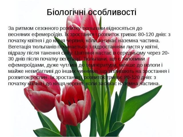 Біологічні особливостіЗа ритмом сезонного розвитку тюльпани відносяться до веснянихефемероїдів. Їх зростання і розвиток триває 80-120 днів: з початку квітня і до кінця червня, коли засихає наземна частина. Вегетація тюльпанів починається з від…