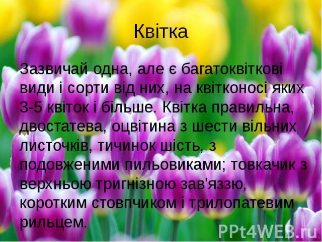 КвіткаЗазвичай одна, але є багатоквіткові видиі сорти від них, на квітконосі яких 3-5 квіток і більше. Квітка правильна, двостатева, оцвітина з шести вільних листочків, тичинок шість, з подовженими пильовиками; товкачик з верхньою тригнізною з…