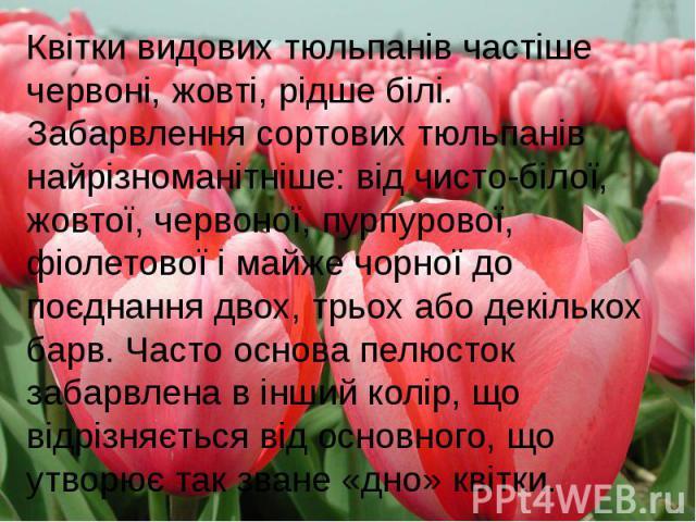Квітки видових тюльпанів частіше червоні, жовті, рідше білі. Забарвлення сортових тюльпанів найрізноманітніше: від чисто-білої, жовтої, червоної, пурпурової, фіолетової і майже чорної до поєднання двох, трьох або декількох барв. Часто основа пелюсто…