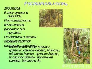 Растительность1000видов В лесу сумрак и сырость.Растительностьвечнозеленая,распо