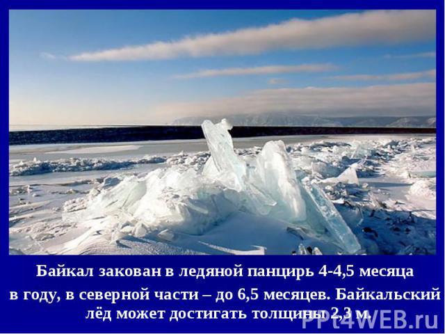 Байкал закован в ледяной панцирь 4-4,5 месяца Байкал закован в ледяной панцирь 4-4,5 месяца в году, в северной части – до 6,5 месяцев. Байкальский лёд может достигать толщины 2,3 м.