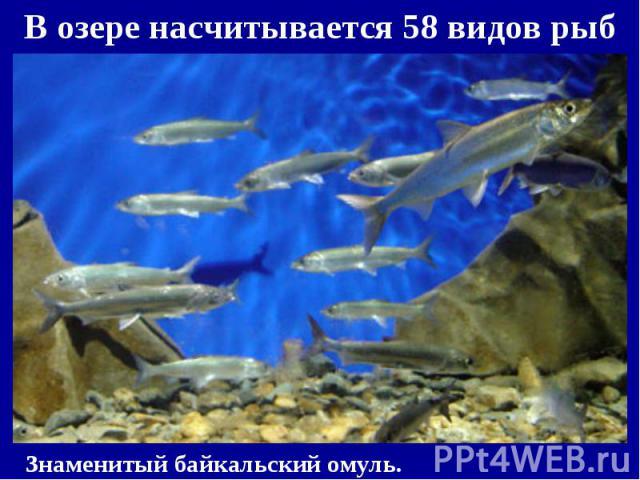 В озере насчитывается 58 видов рыб В озере насчитывается 58 видов рыб
