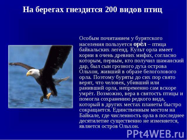 На берегах гнездится 200 видов птиц На берегах гнездится 200 видов птиц