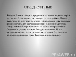 ОТРЯД КУРИНЫЕВ фауне России 19 видов, среди которых фазан, перепел, серая