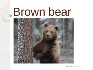 Brown bearDashkov Danil, 3a