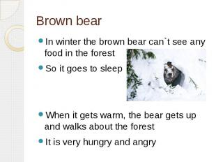 Brown bearIn winter the brown bear can`t see any food in the forestSo it goes to