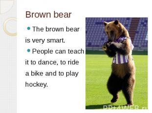Brown bearThe brown bear is very smart. People can teach it to dance, to ride a