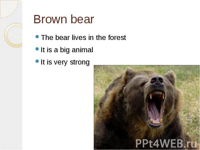 Brown bearThe bear lives in the forestIt is a big animalIt is very strong
