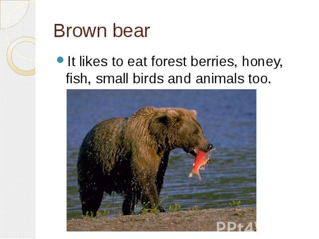 Brown bearIt likes to eat forest berries, honey, fish, small birds and animals too.