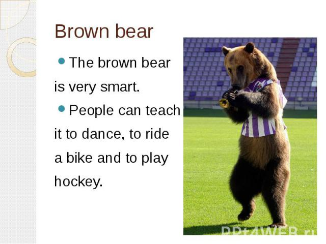 Brown bearThe brown bear is very smart. People can teach it to dance, to ride a bike and to play hockey.