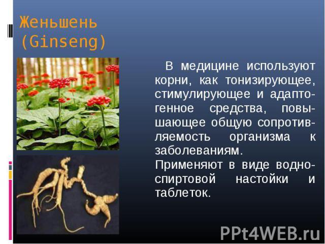 В медицине используют корни, как тонизирующее, стимулирующее и адапто-генное средства, повы-шающее общую сопротив-ляемость организма к заболеваниям. Применяют в виде водно-спиртовой настойки и таблеток. В медицине используют корни, как тонизирующее,…