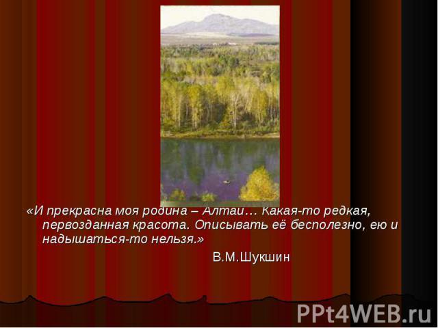 «И прекрасна моя родина – Алтай… Какая-то редкая, первозданная красота. Описывать её бесполезно, ею и надышаться-то нельзя.» В.М.Шукшин