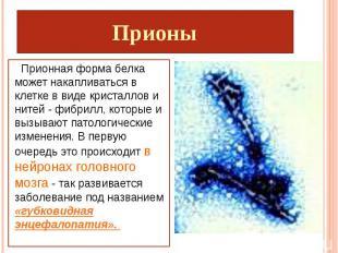 Прионы Прионная форма белка может накапливаться в клетке в виде кристаллов и нит
