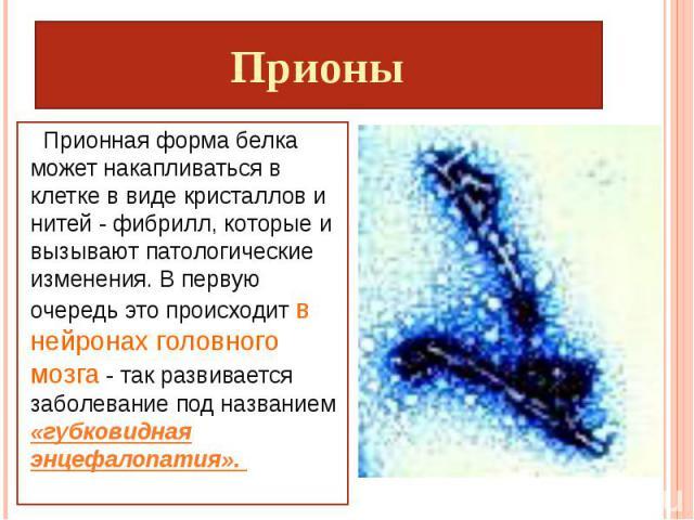 Прионы Прионная форма белка может накапливаться в клетке в виде кристаллов и нитей - фибрилл, которые и вызывают патологические изменения. В первую очередь это происходит в нейронах головного мозга - так развивается заболевание под названием «губков…