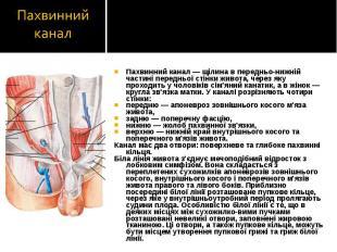 Пахвинний канал — щілина в передньо-нижній частині передньої стінки живота, чере