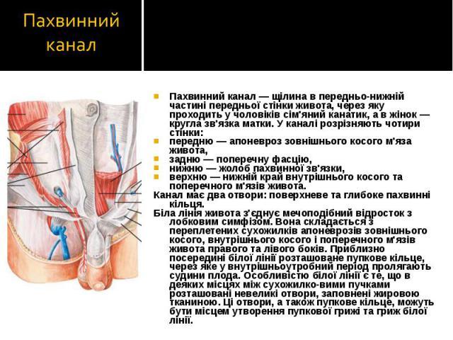 Пахвинний канал — щілина в передньо-нижній частині передньої стінки живота, через яку проходить у чоловіків сім'яний канатик, а в жінок — кругла зв'язка матки. У каналі розрізняють чотири стінки: Пахвинний канал — щілина в передньо-нижній частині пе…