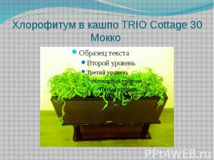 Хлорофитум в кашпо TRIO Cottage 30 Mокко