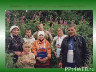 Инкинские болота и леса богаты целебными ягодами.