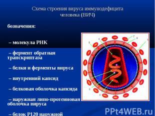 Обозначения: Обозначения: 1 – молекула РНК 2 – фермент обратная транскриптаза 3
