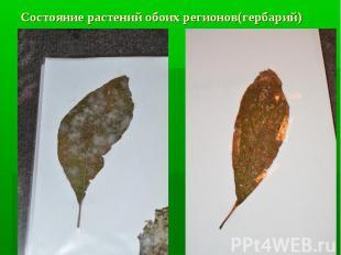 Состояние растений обоих регионов(гербарий)