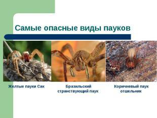 Самые опасные виды пауков