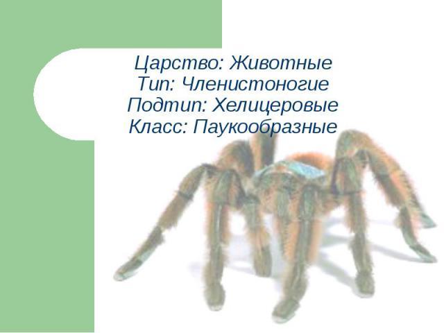 Царство: ЖивотныеТип: ЧленистоногиеПодтип: ХелицеровыеКласс: Паукообразные