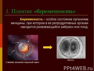 1. Понятие «беременность» Беременность – особое состояние организма женщины, при