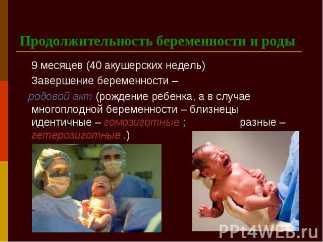 Продолжительность беременности и роды 9 месяцев (40 акушерских недель) Завершение беременности – родовой акт (рождение ребенка, а в случае многоплодной беременности – близнецы идентичные – гомозиготные ; разные – гетерозиготные .)