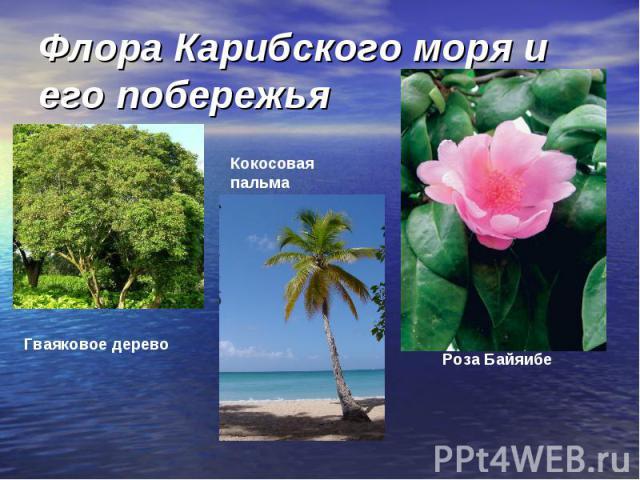 Флора Карибского моря и его побережья