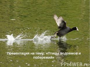 Презентация на тему: «Птицы водоёмов и побережий» Презентация на тему: «Птицы во