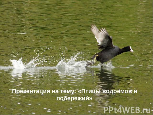 Презентация на тему: «Птицы водоёмов и побережий» Презентация на тему: «Птицы водоёмов и побережий»