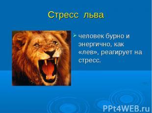 человек бурно и энергично, как «лев», реагирует на стресс. человек бурно и энерг