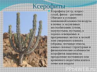 Ксерофиты Ксерофиты (от гр. ксерос- сухой, фитон – растение) Обитают в условиях