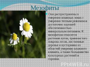 Мезофиты Они распространены в умеренно влажных зонах с умеренно теплым режимом и